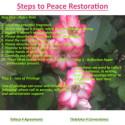 Steps to Peace Restoration